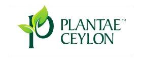 Plantae Ceylon